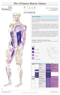 muscle testing and function kendall free ebook